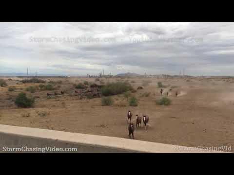 Wild Horses Stampede,  Maricopa AZ – 9/25/2019