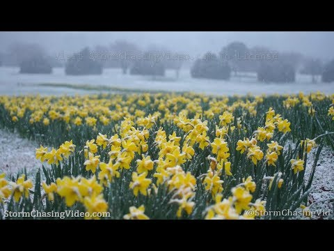 Winter Snow Mixed With Spring Scenes in Raleigh, NC – 2/20/2020