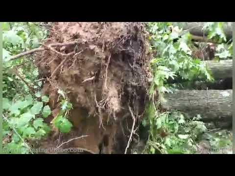 Amherst Junction WI Severe Storm Damage – 7/29/2021