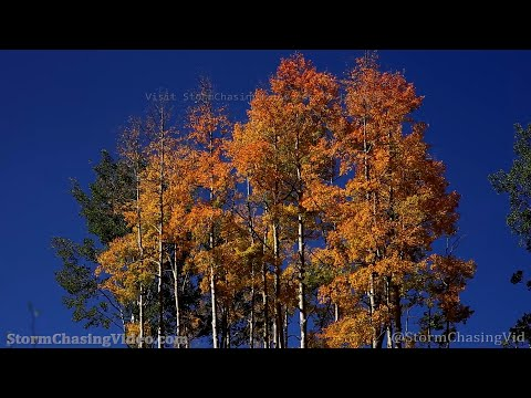 Beautiful Fall Foliage Colors, Breckenridge, CO –  9/18/2021